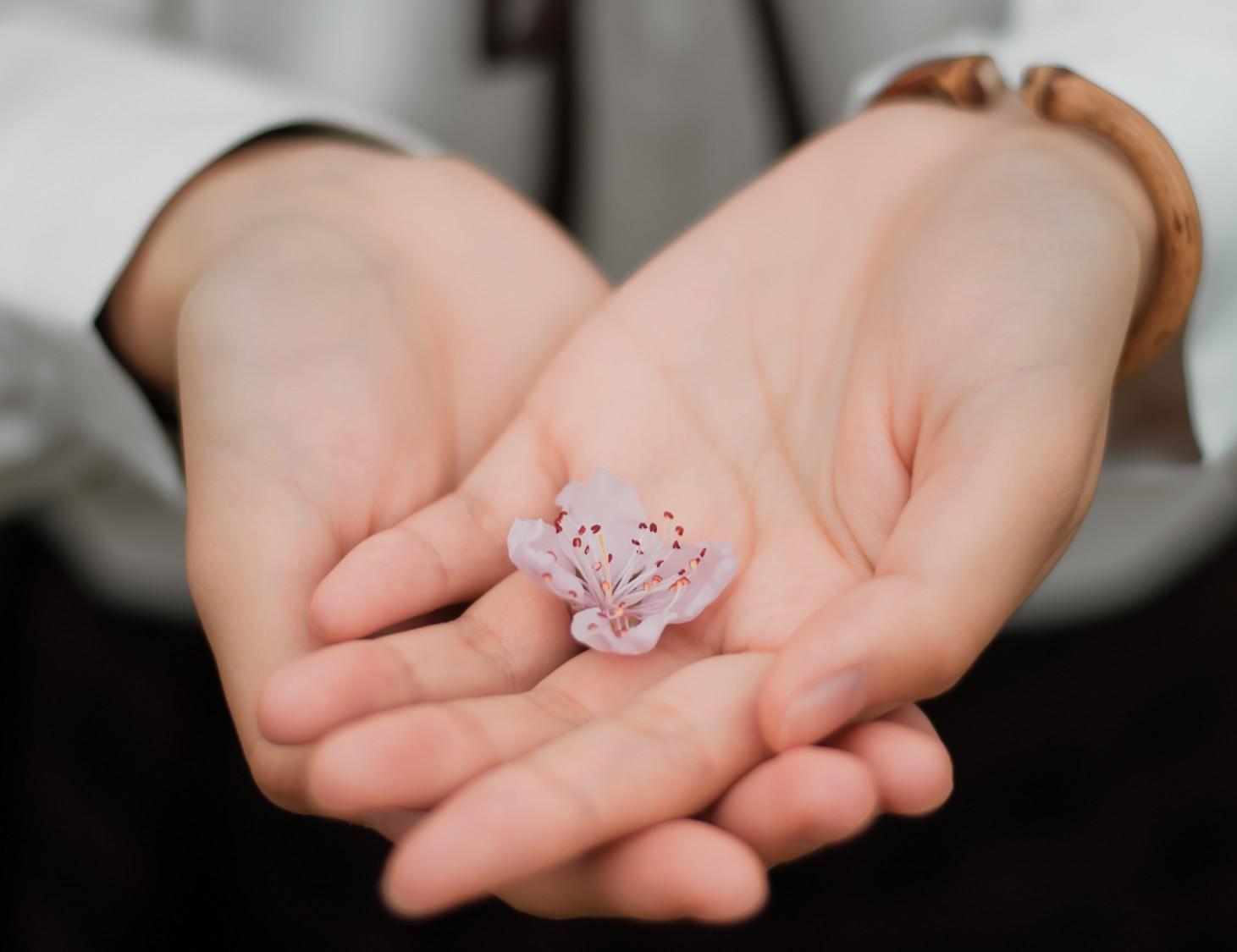 Pieni kukka kämmenillä