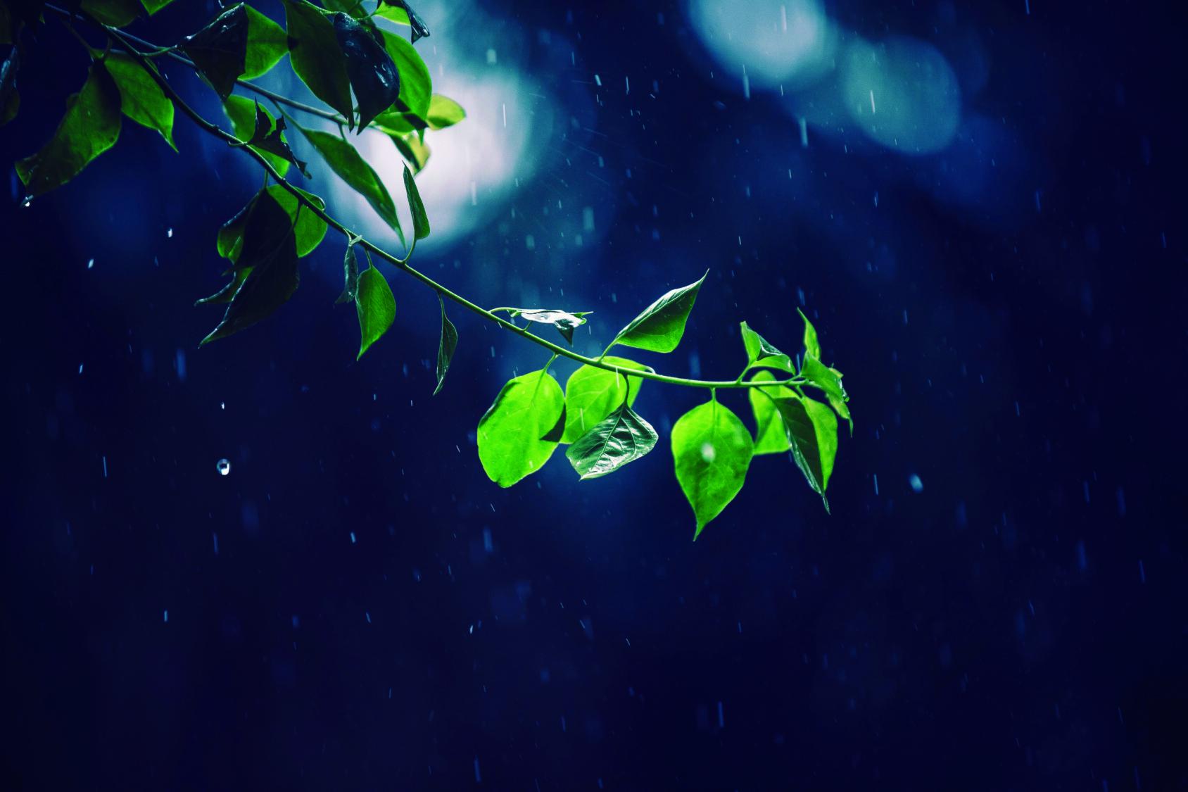 Sade pisaroi vihreille lehdille