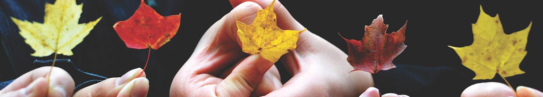 Useita henkilöitä pitää yksittäisiä vaahteranlehtiä käsissään.